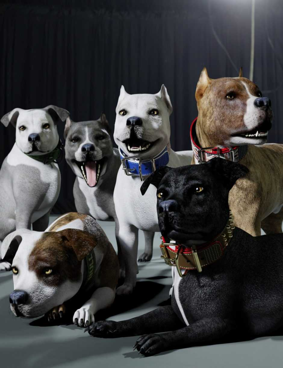 Bully Skins and Collars for Daz Dog 8